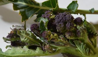 pieces of purple sprouting broccoli