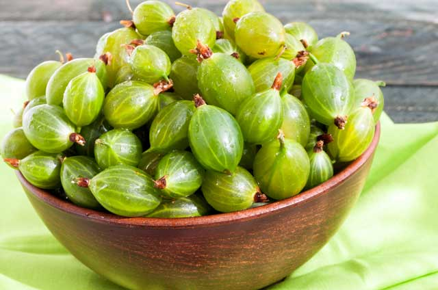 bowl piled high with green gooseberries